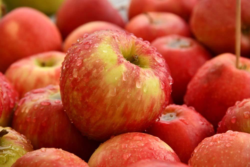 صور تفاح 20 صور التفاح
