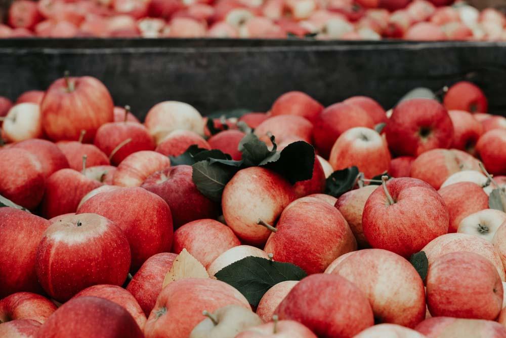 صور تفاح 6 صور التفاح