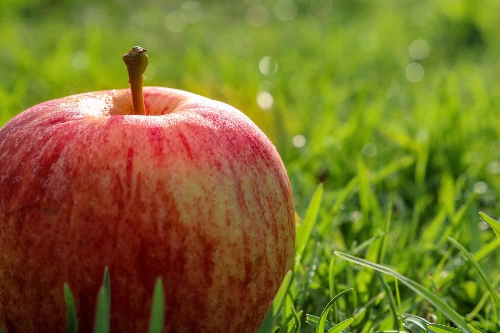 صور تفاح 7 صور التفاح