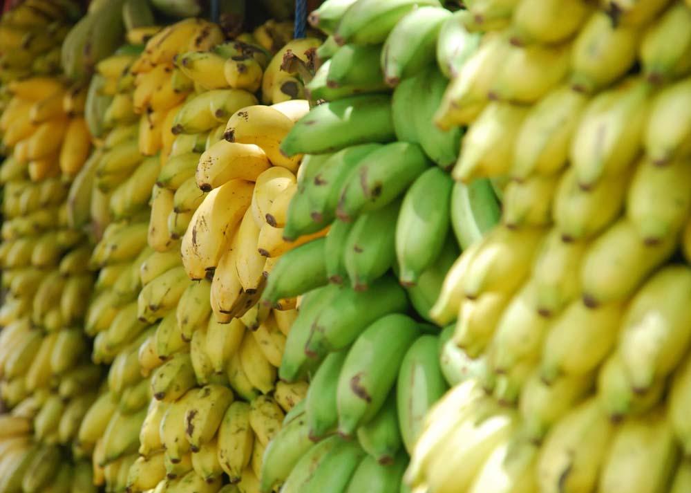 صور موز 8 صور الموز