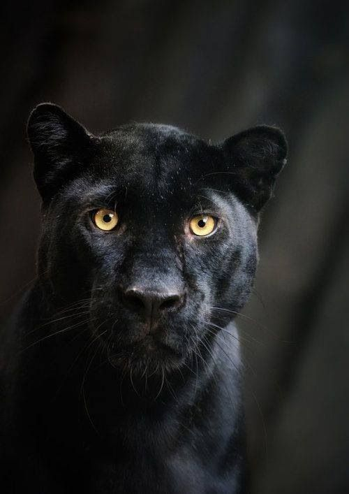 Black color ماهي معاني الالوان عبر الثقافات