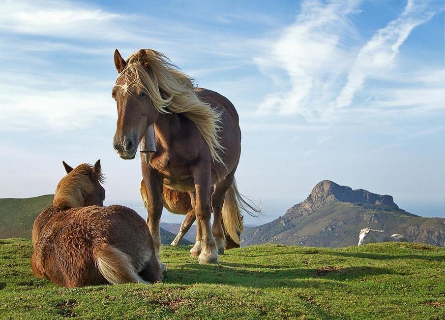 حصان 10 صور معلومات عن الخيول