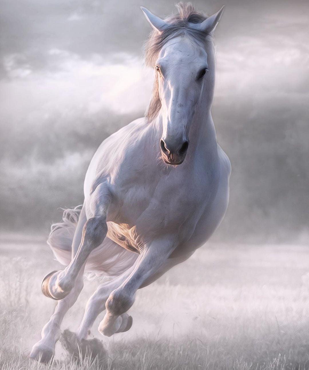 حصان 13 صور معلومات عن الخيول