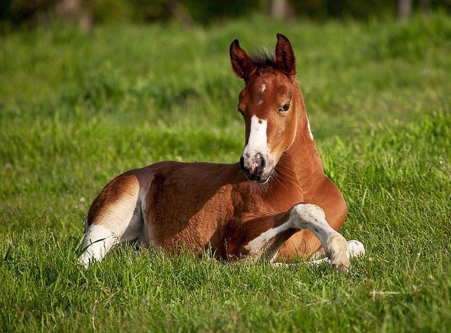 حصان 2 صور معلومات عن الخيول