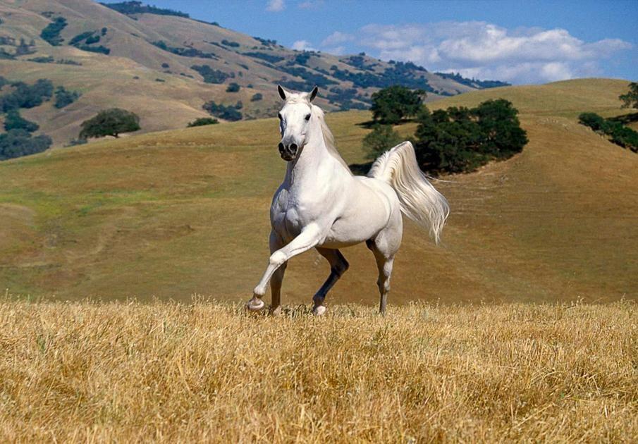 حصان 3 صور معلومات عن الخيول