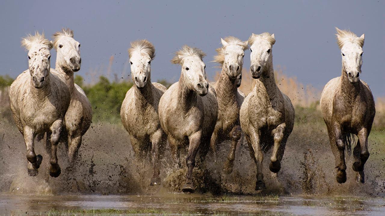 حصان 5 صور معلومات عن الخيول