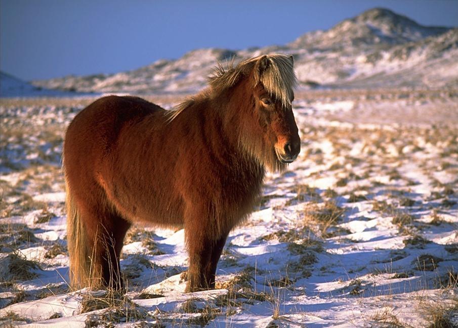حصان 7 صور معلومات عن الخيول
