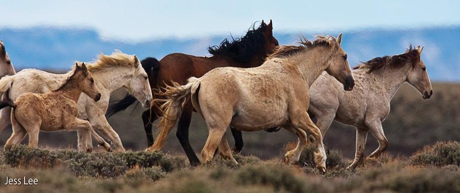 حصان 8 صور معلومات عن الخيول