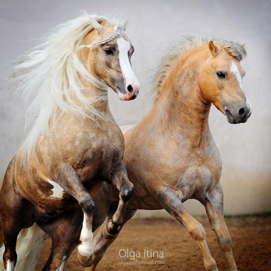 حصان 9 صور معلومات عن الخيول