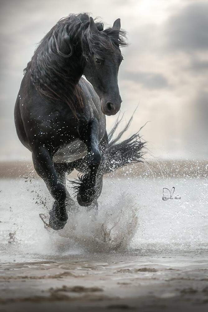 خيل 10 صور معلومات عن الخيول