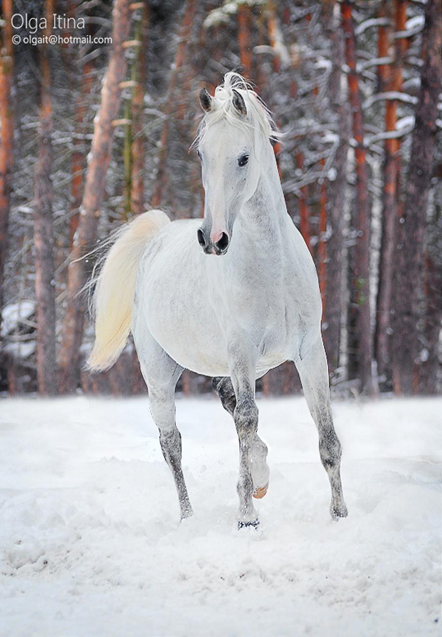 خيل 11 صور معلومات عن الخيول