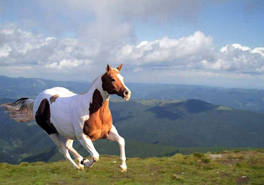 خيل 13 صور معلومات عن الخيول