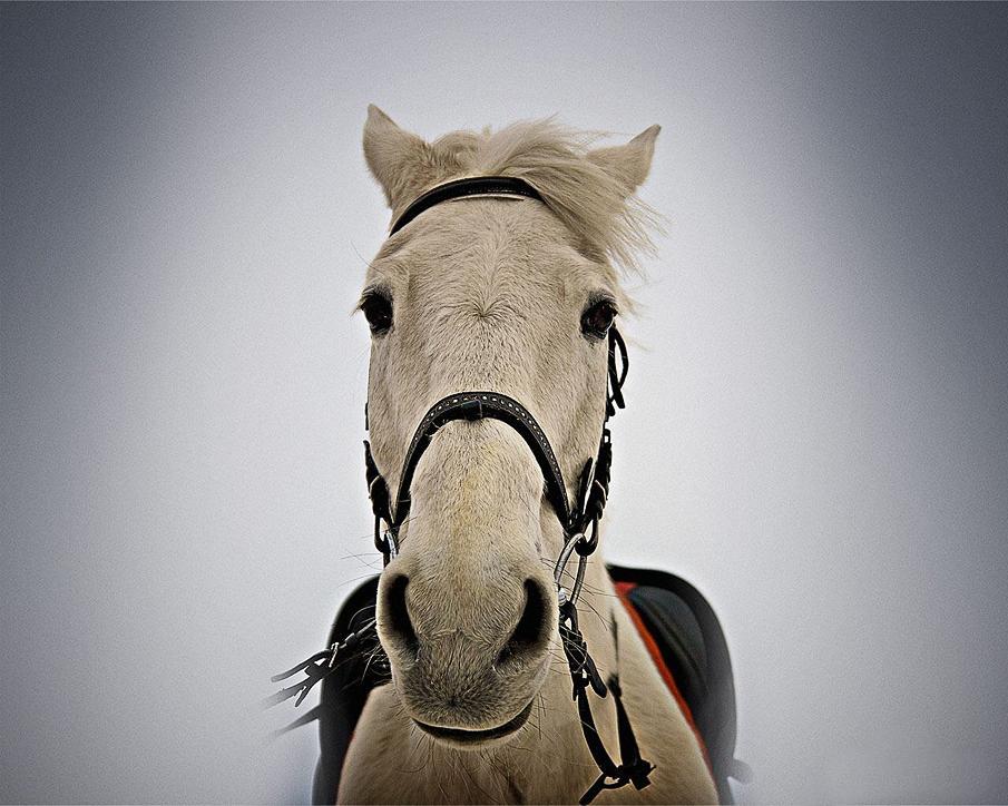 خيل 2 صور معلومات عن الخيول