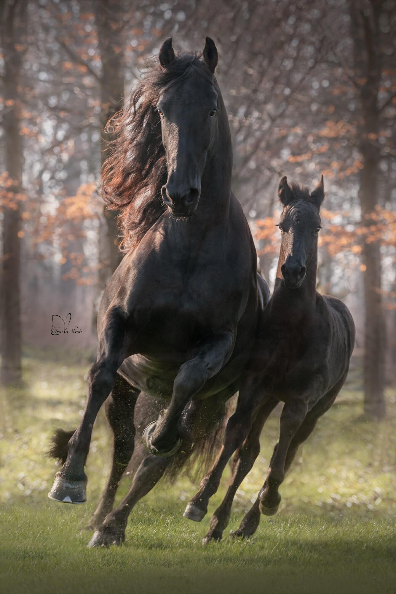 خيل 3 صور معلومات عن الخيول