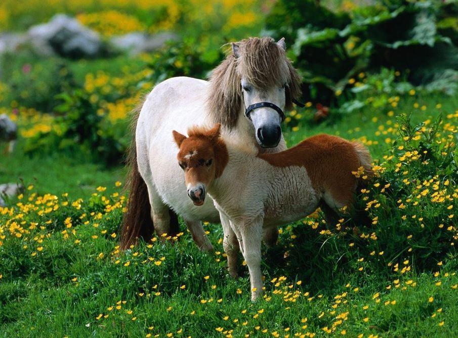 خيل 4 صور معلومات عن الخيول