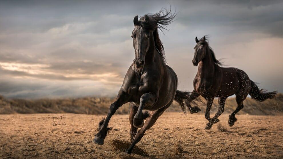 خيل 5 صور معلومات عن الخيول