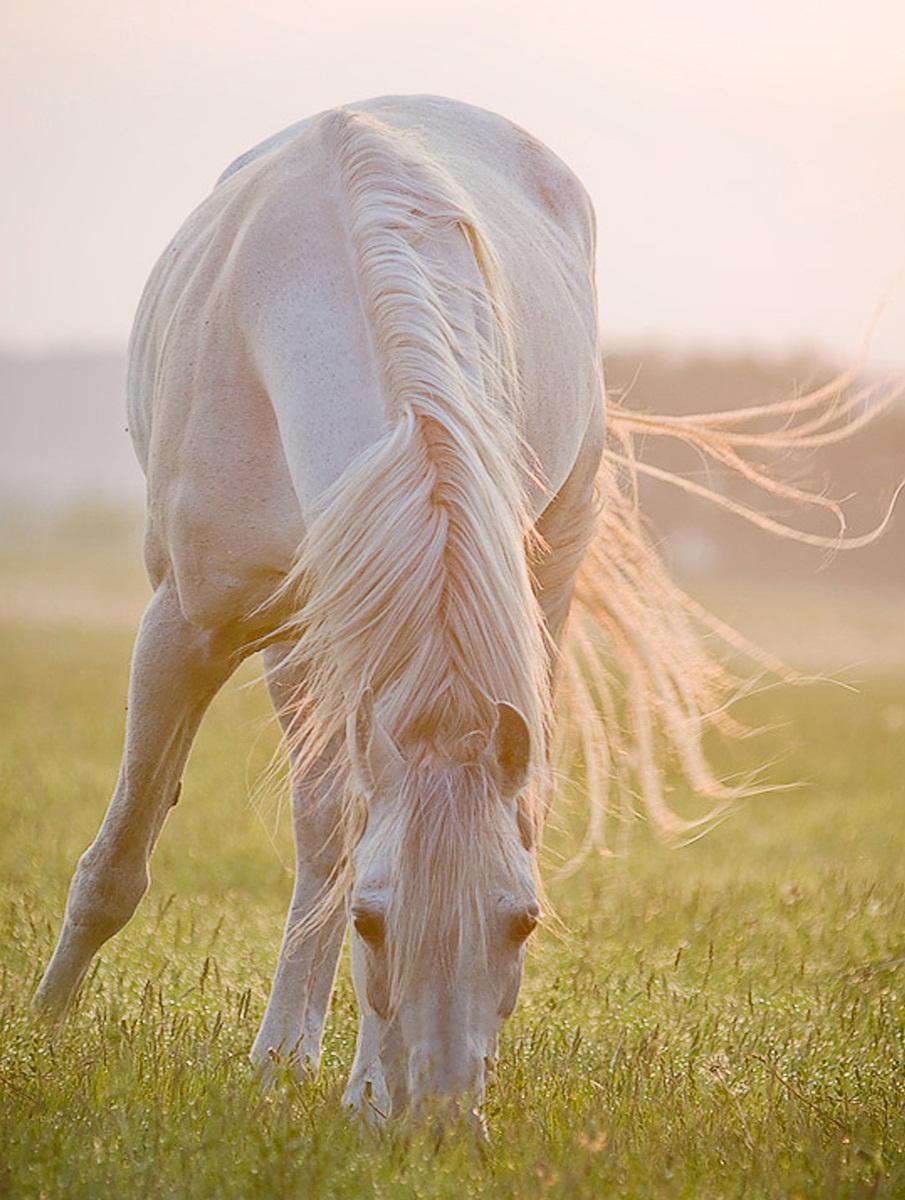 خيل 6 صور معلومات عن الخيول