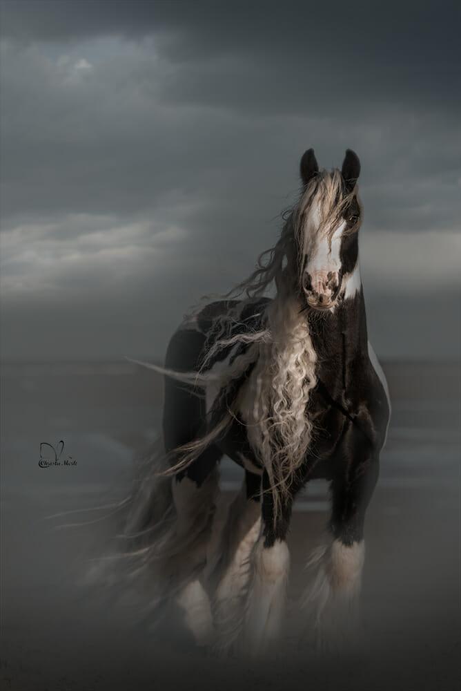 خيل 7 صور معلومات عن الخيول