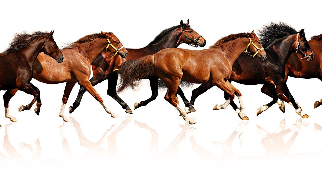 خيل 9 صور معلومات عن الخيول