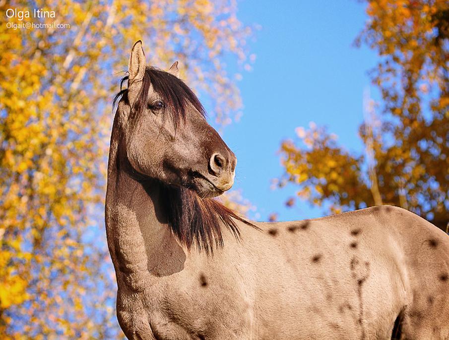 خيول 4 صور معلومات عن الخيول