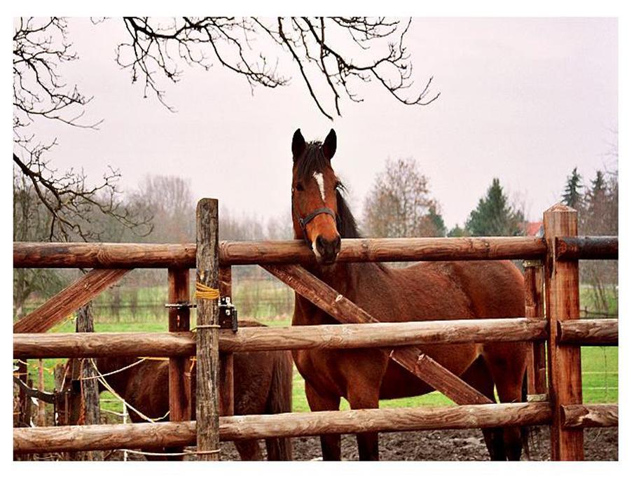 خيول 6 صور معلومات عن الخيول