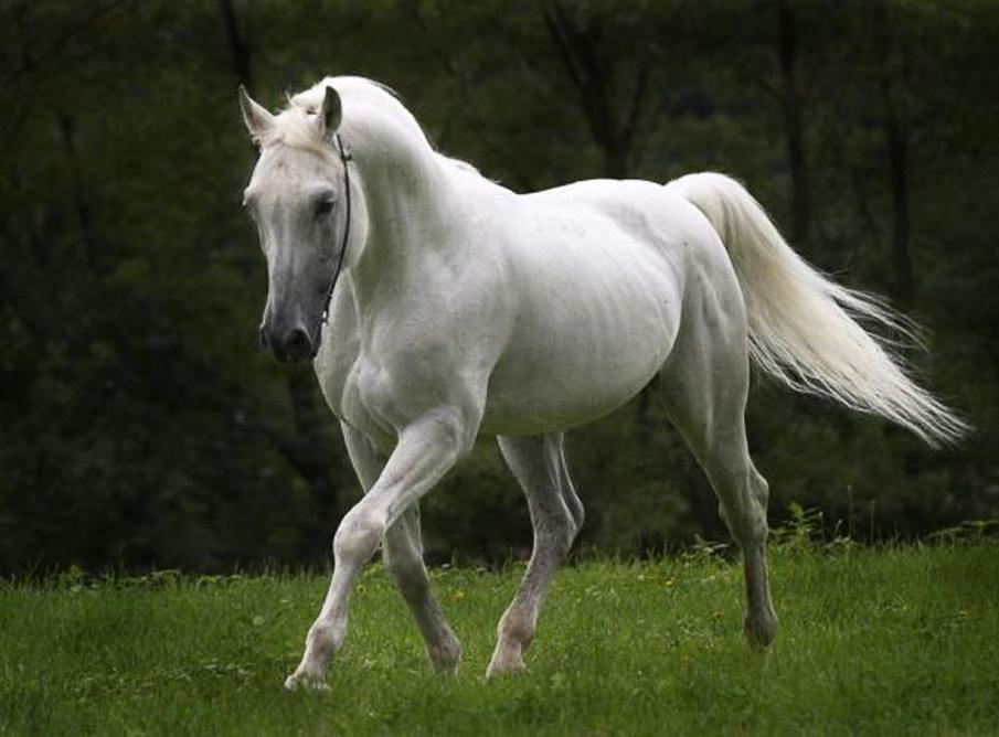 خيول 8 صور معلومات عن الخيول