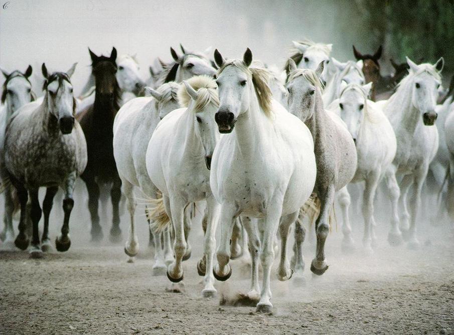 صول حصان 11 صور معلومات عن الخيول