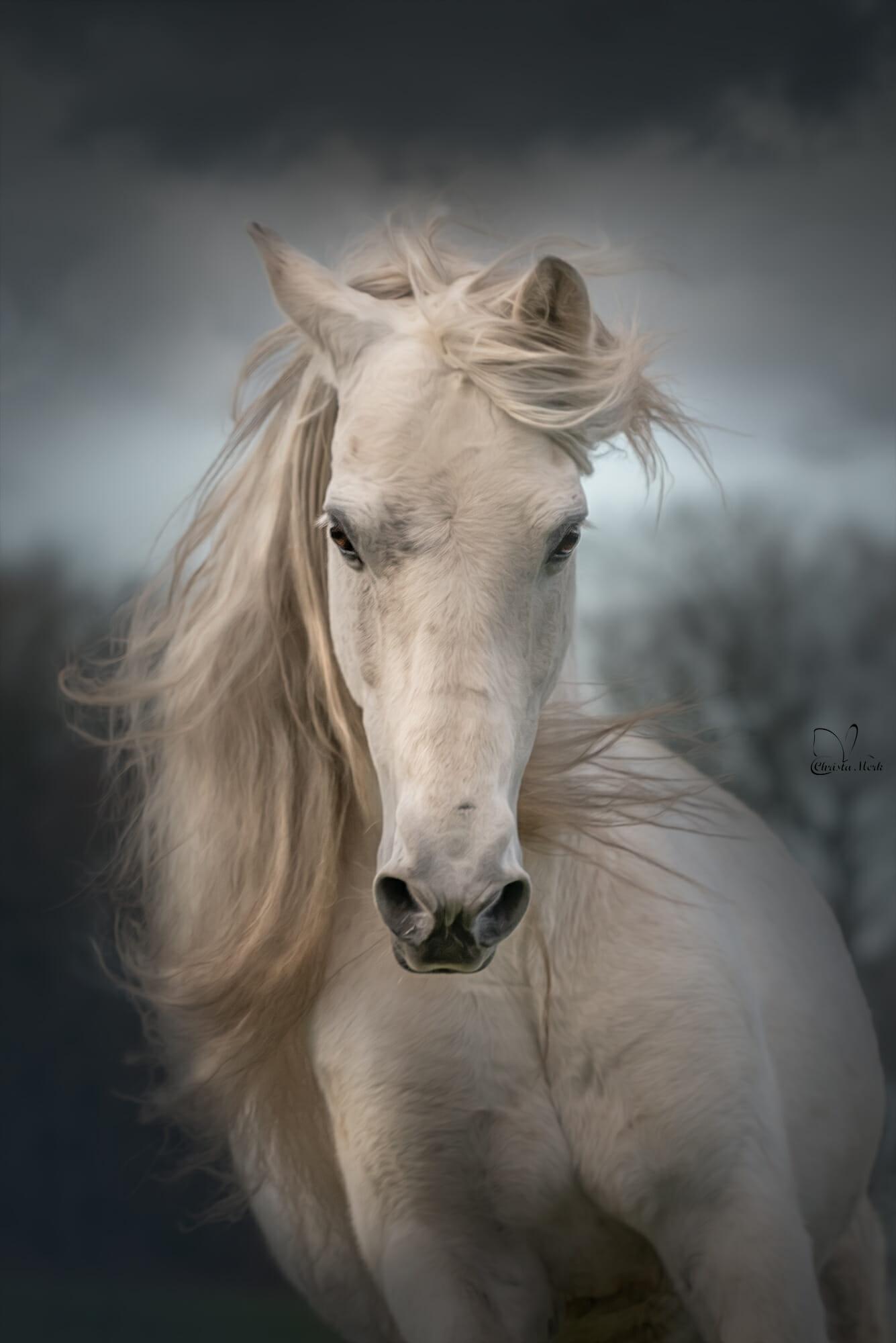 صول حصان 13 صور معلومات عن الخيول