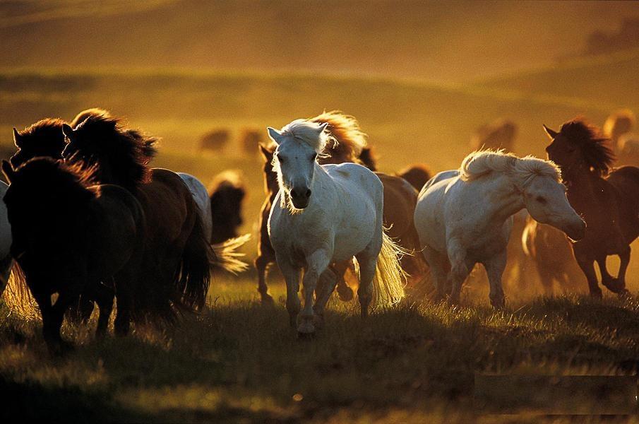 صول حصان 3 صور معلومات عن الخيول
