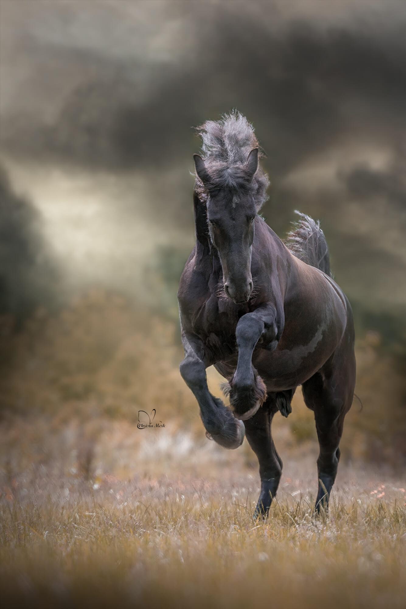 صول حصان 4 صور معلومات عن الخيول