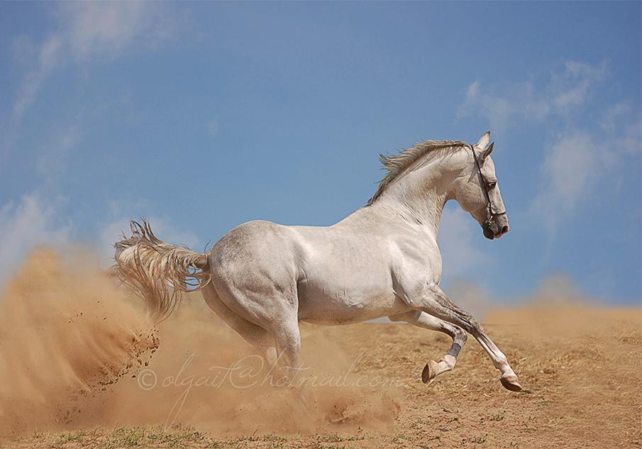 صول حصان 5 صور معلومات عن الخيول