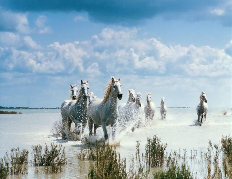 صول حصان 8 صور معلومات عن الخيول