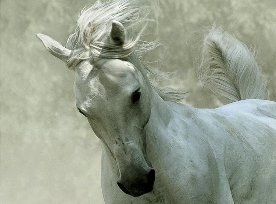 صول حصان 9 صور معلومات عن الخيول